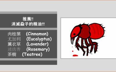 蝨子 (LICE)