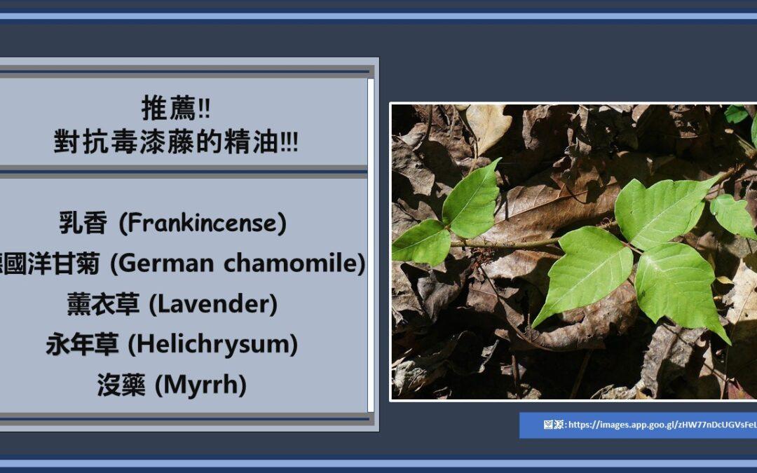 毒漆藤 (Poison Ivy)